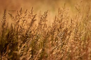 High Grass II